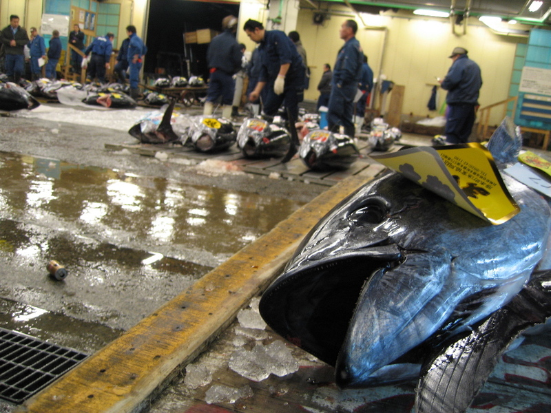 Tokyo_fish_market1